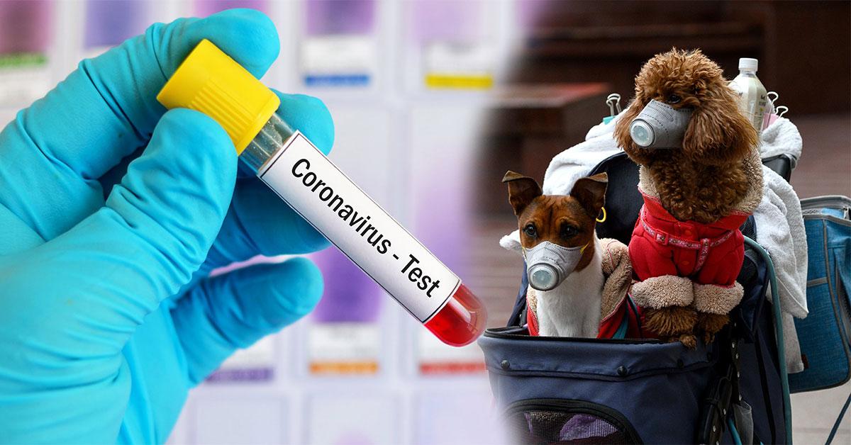 Pes pozitívny na koronavírus
