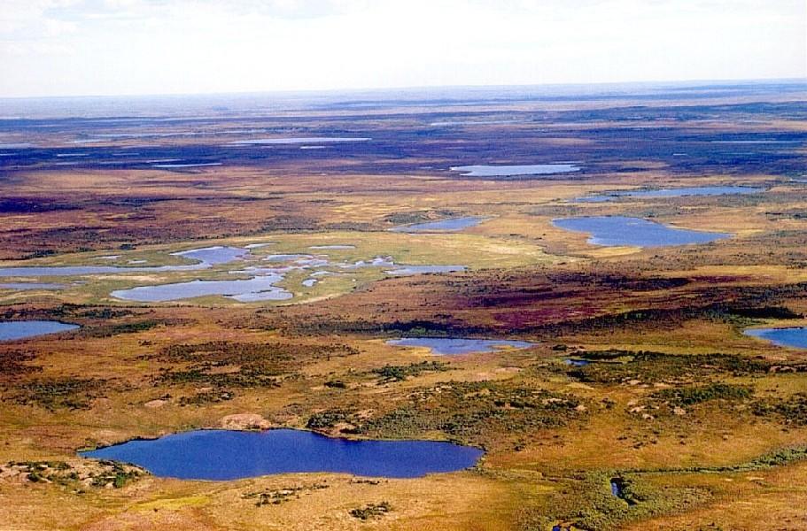 Sibírska tundra