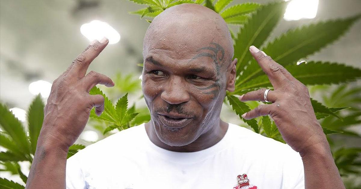 Úspešný biznis - Mike Tyson, Zdroj: vice.com