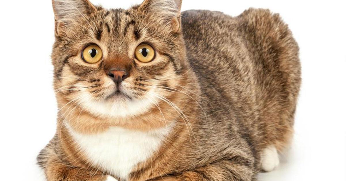 Mačka s koronavírusom
