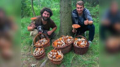 """Photo of Fotografia, ktorá """"povzbudila"""" tisícky hubárov! Juraj a Dominik našli 700 kozákov!"""