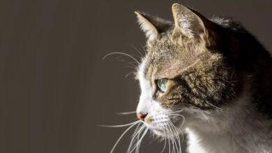 Photo of Mačka uväznená v prepravnom kontajneri prežila až dva mesiace len na pavúkoch