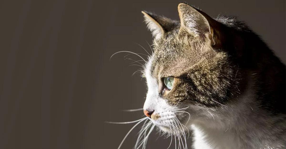 Mačka prežila dva mesiace