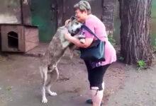 Photo of Ukradnutý pes bol 2 roky bez paničky. Video z ich opätovného stretnutia dojme každého!
