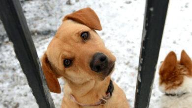 Photo of SCHVÁLENÉ – tresty za týranie zvierat sa sprísnia