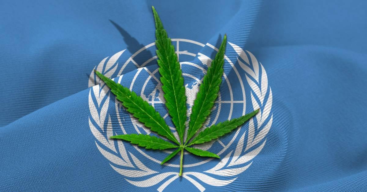 Marihuana OSN